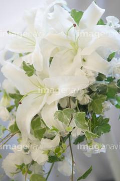 カサブランカ (植物)の画像 p1_38