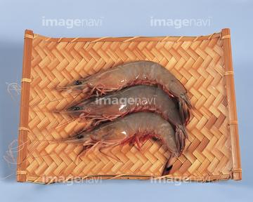 コウライエビ】の画像素材   写真素材ならイメージナビ