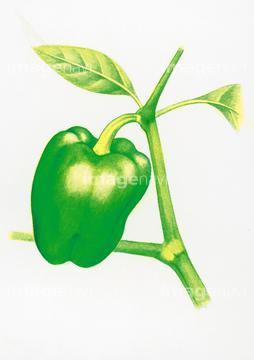 食べ物のイラスト野菜 夏野菜 ピーマンの画像素材 食べ物飲み物