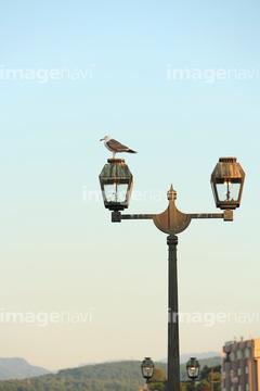 ガス灯とカモメの画像素材 鳥類生き物の写真素材ならイメージナビ