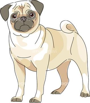 犬 かわいい パグイラストの画像素材 生き物イラストcgの