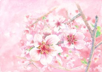 桃の花 イラストの画像素材 季節イベントイラストcgのイラスト