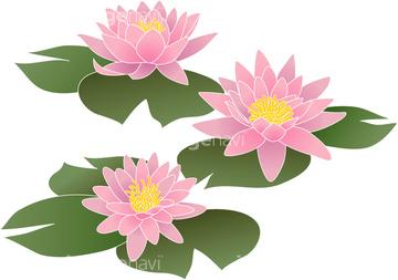 スイレンの画像素材 葉花植物の写真素材ならイメージナビ