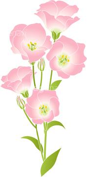 トルコギキョウの画像素材 花植物の写真素材ならイメージナビ
