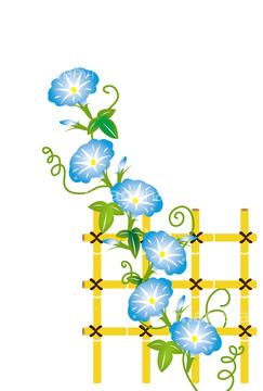 アサガオの画像素材 花植物の写真素材ならイメージナビ