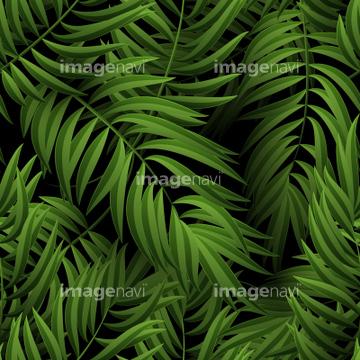 自然 風景 森林 ジャングル 飾り アフリカ の画像素材 写真素材