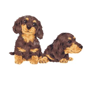 犬 かわいい ダックスフントイラストの画像素材 生き物