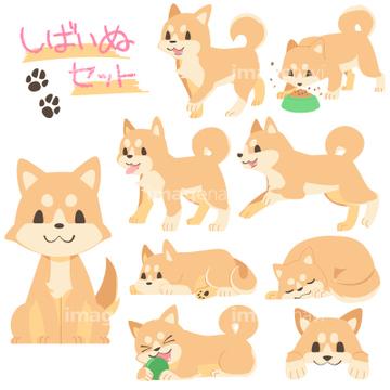 犬のイラスト特集 柴犬イラストの画像素材 生き物イラストcg