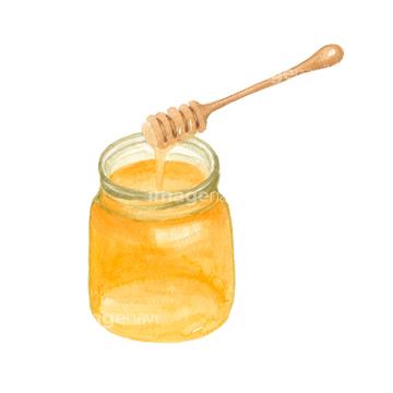 蜂蜜 イラスト