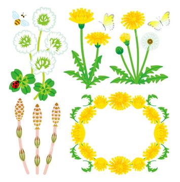 花 イラスト タンポポ 花かんむりロイヤリティフリーの画像素材