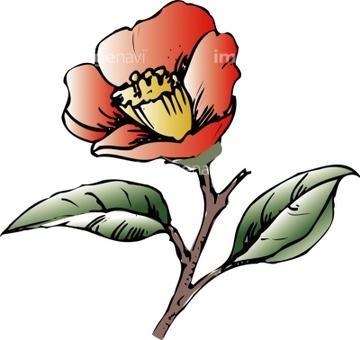 イラスト 手書き 花 ツバキの画像素材 花植物イラストcgの