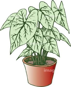 観葉植物 ハニシキイラストの画像素材 花植物イラストcgの