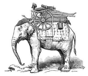 英緬戦争】の画像素材 | 陸の動物・生き物の写真素材ならイメージナビ