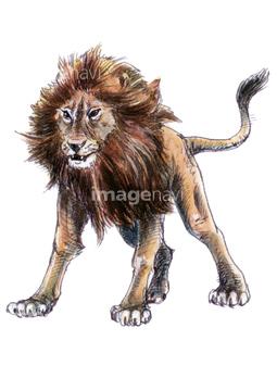 動物のイラスト ライオンイラストの画像素材 生き物イラスト