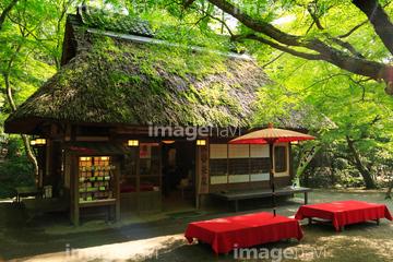 奈良公園 水谷茶屋の画像素材 日本国地域の写真素材ならイメージナビ