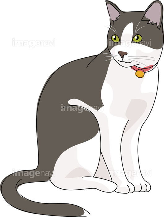 猫 日本猫 白黒 の画像素材 イラスト素材ならイメージナビ