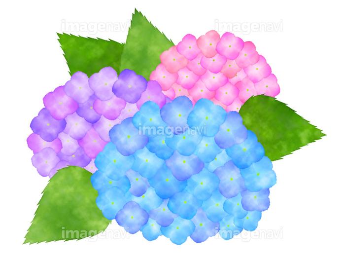 水彩風紫陽花のクリップアートの画像素材31018581 イラスト素材