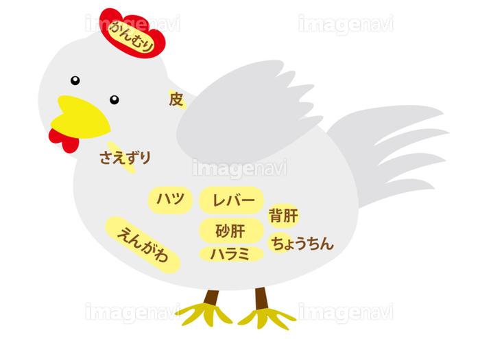 鶏肉 内臓部位の名称の画像素材31050638 イラスト素材ならイメージナビ
