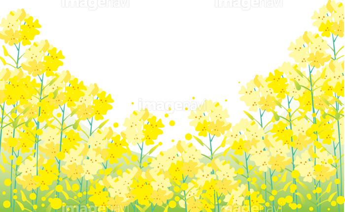 菜の花畑の画像素材31057885 イラスト素材ならイメージナビ
