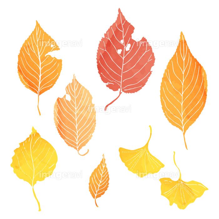 落葉 の画像素材 31073651 イラスト素材ならイメージナビ