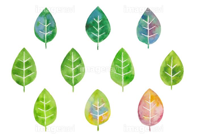 いろいろな葉っぱ 水彩イラスト の画像素材 イラスト素材ならイメージナビ