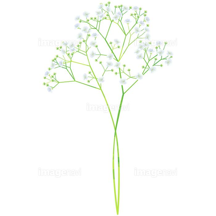 誕生花5月カスミソウの画像素材31092845 イラスト素材なら