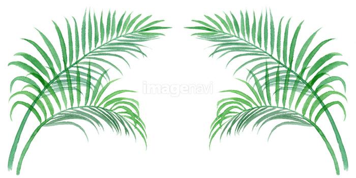 ヤシの木の無料イラスト素材イラストイメージ
