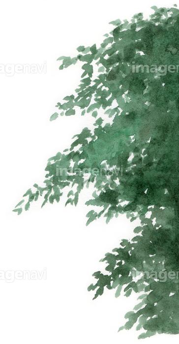 樹の枝葉の画像素材31115125 イラスト素材ならイメージナビ