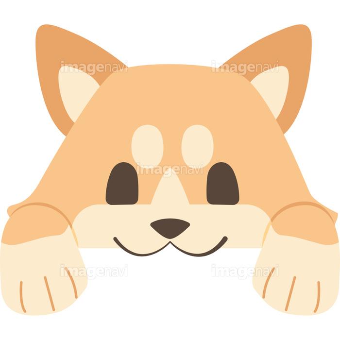 ひょっこりと顔を出す犬柴犬の画像素材31189651 イラスト素材