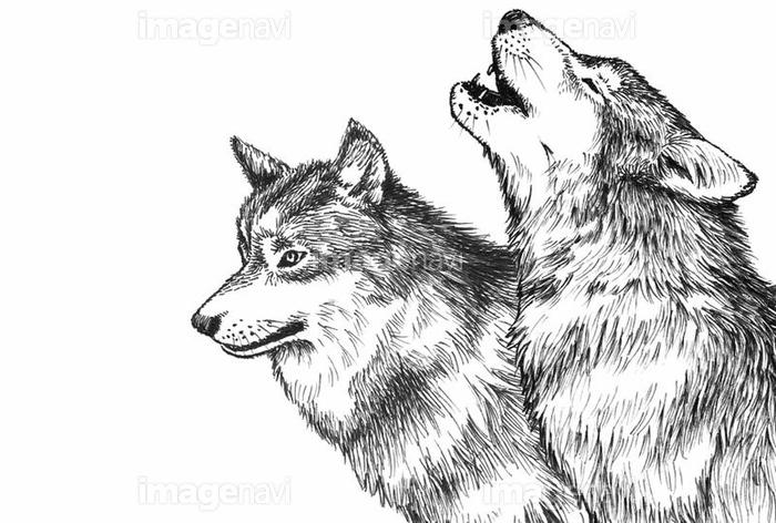 オオカミペン画の画像素材31237562 イラスト素材ならイメージナビ