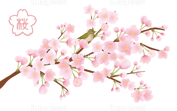 桜の木 イラスト素材の画像素材31252518 イラスト素材ならイメージナビ