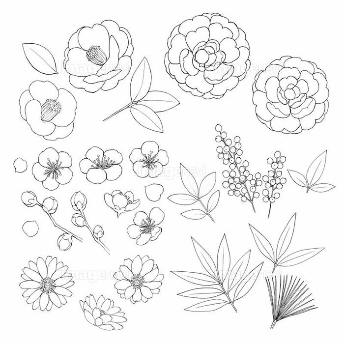 お正月の花素材線画の画像素材31252583 イラスト素材ならイメージナビ