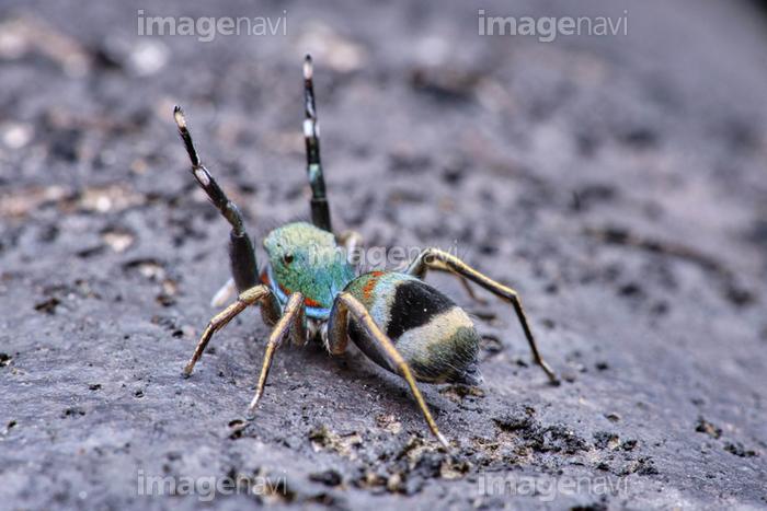 緑色 蜘蛛