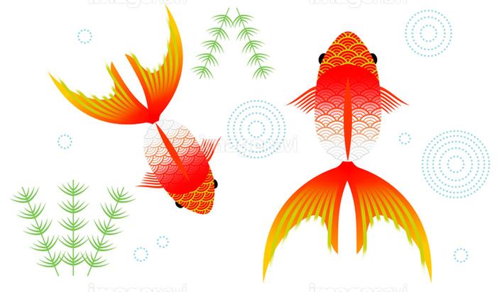 和風の金魚イラスト の画像素材 イラスト素材ならイメージナビ
