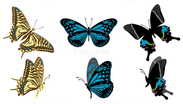 アゲハ蝶の画像素材40504091 イラスト素材ならイメージナビ