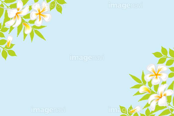南国の花 背景 の画像素材 イラスト素材ならイメージナビ