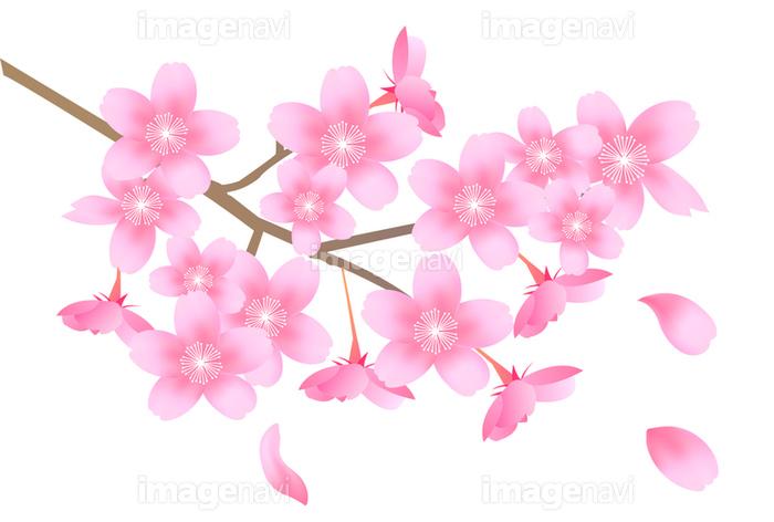 桜 春 花 アイコン の画像素材41044863 イラスト素材ならイメージナビ