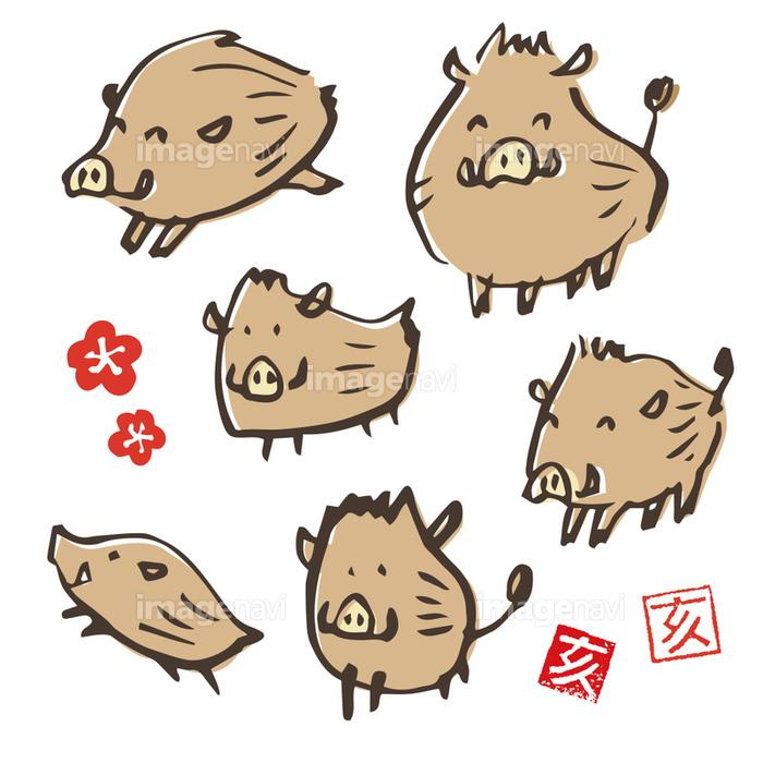 手書き 猪のイラスト 年賀状素材 干支動物の画像素材41125793