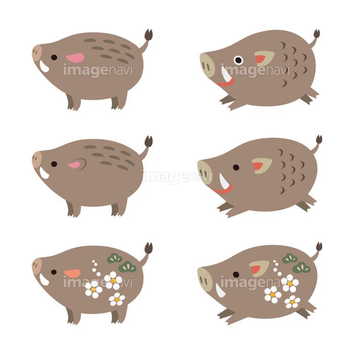かわいい猪のイラスト 亥 干支 年賀素材の画像素材41130182