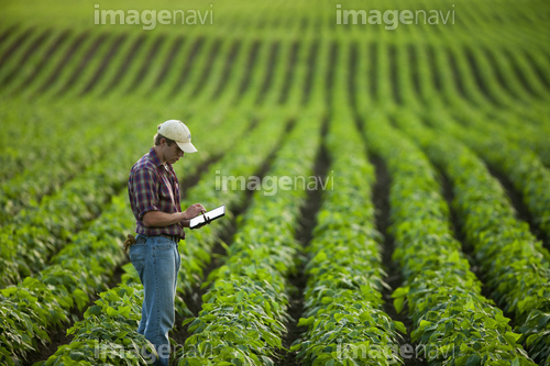 Agriculture - A young farmer in a mid growth soybean field records crop data on his Apple iPad. This represents the next generation of young farmers using the latest technology in farming operations / Minnesota, USA.